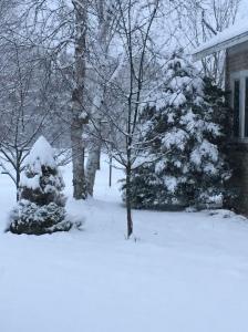 SnowDay2015B