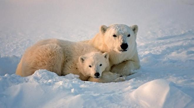 polar-bear-mom-cub.jpg